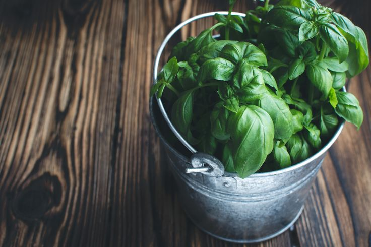 Basil in a bucket - download this beautiful picture in hi-res for FREE from foodiesfeed.com / #free #download #hires #foodphotography #food #picture #photography #design #nocopyright #basil #herb #herbs #fresh #healthy