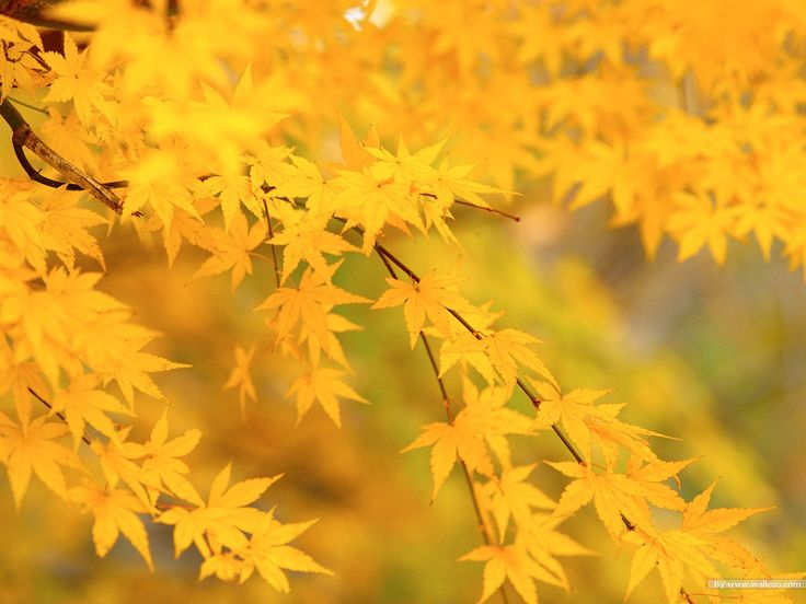 fall leaf pictures   Autumn Tints,Goden Autumn, Beautiful Autumn Leaves Wallpapers 1600 ...