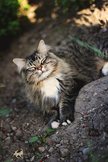 Happy ♥ #cat