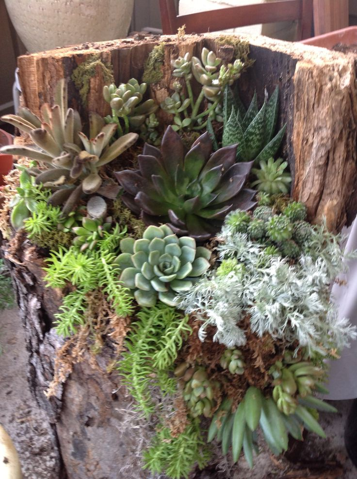 Put coconut liner in, filled with dirt and planted Succulents into the log, along with some sedum.