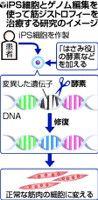 iPS細胞(人工多能性幹細胞)研究の進展に、遺伝子を自在に書き換える「ゲノム編集※」技術が大きな役割を果たそうとしている。難病患者からiPS細胞を作り、ゲノム編集で病気の原因遺伝子を修復できるかもしれないからだ。