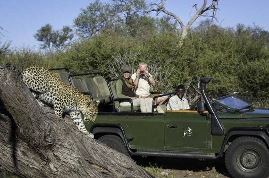 Amazing game drive at Tubu Tree Camp (Okavango Delta, Botswana). If that looks like a place you would like to visit - just let us know: info@gondwanatoursandsafaris.com