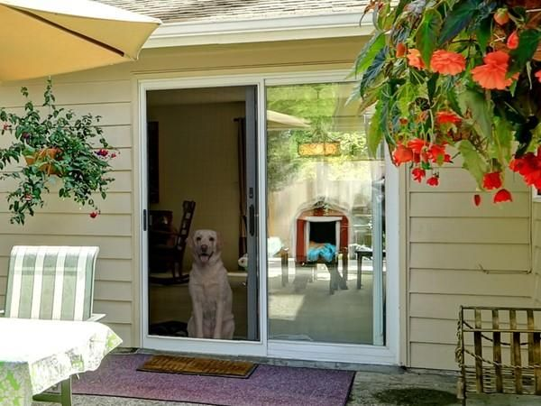 If You Are Interested In A Traditional Style Security Door That Complements The Architecture Of Your Home Screenmobi Security Screen Screen Door Security Door