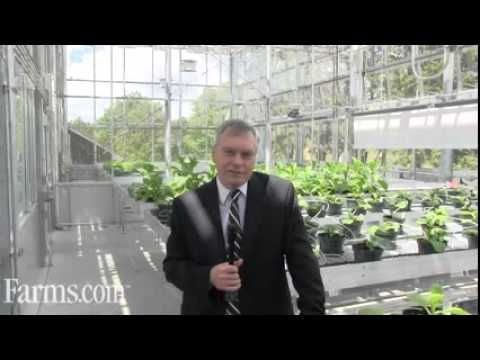 Arie Mazur New Greenhouse Research at Canada's SCPFRC