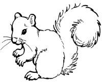 Print out the squirrel picture onto cardstock paper; print