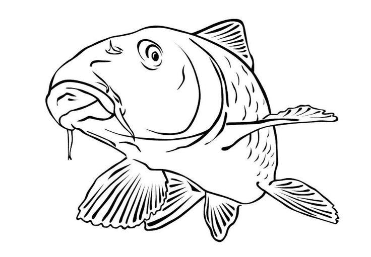 40 malvorlage fisch a4 malvorlage fisch a4  fisch