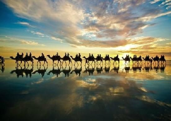 Camels in Broome.