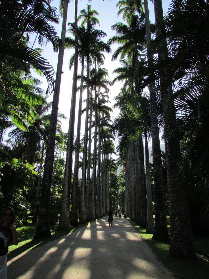 Jardim Botânico, Rio de Janeiro, fundado na regência do príncipe Dom João VI, em 13 de Junho de 1808. ...Foto: Roberto Fróes
