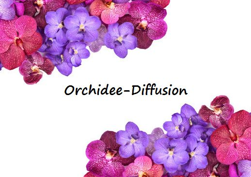 Orchid Nurseries- Sale of Orchids botanicals and Vanda