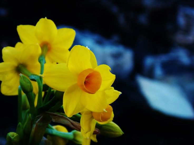 Bright flower with dull ashy background