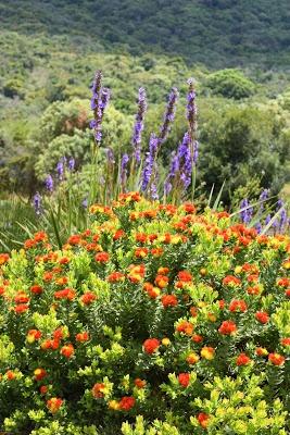 66 Square Feet: Kirstenbosch in 80 minutes