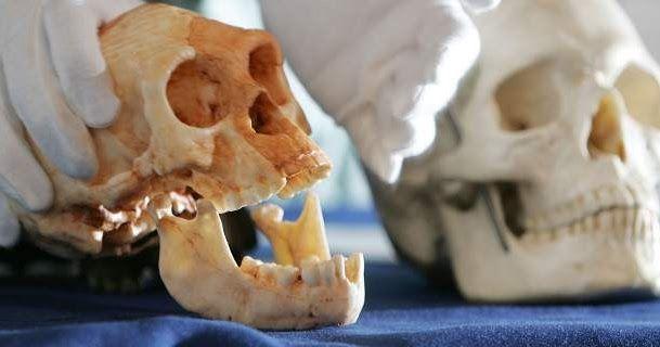 Ανακαλύφθηκαν τα αρχαιότερα μέχρι σήμερα απολιθώματα του Homo sapiens -Τουλάχιστον 300.000 ετών [βίντεο]