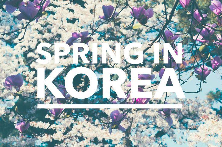 #Spring in #Korea!  #Flowers everywhere!