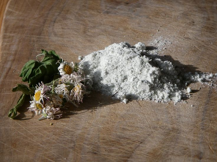 697 best images about kochen mit unkr utern aus dem garten oder natur on pinterest medicine. Black Bedroom Furniture Sets. Home Design Ideas