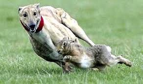 Waterloo Cup Hare coursing event