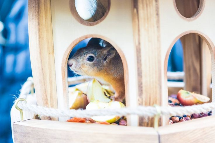 Squirrels moved to VDNKh