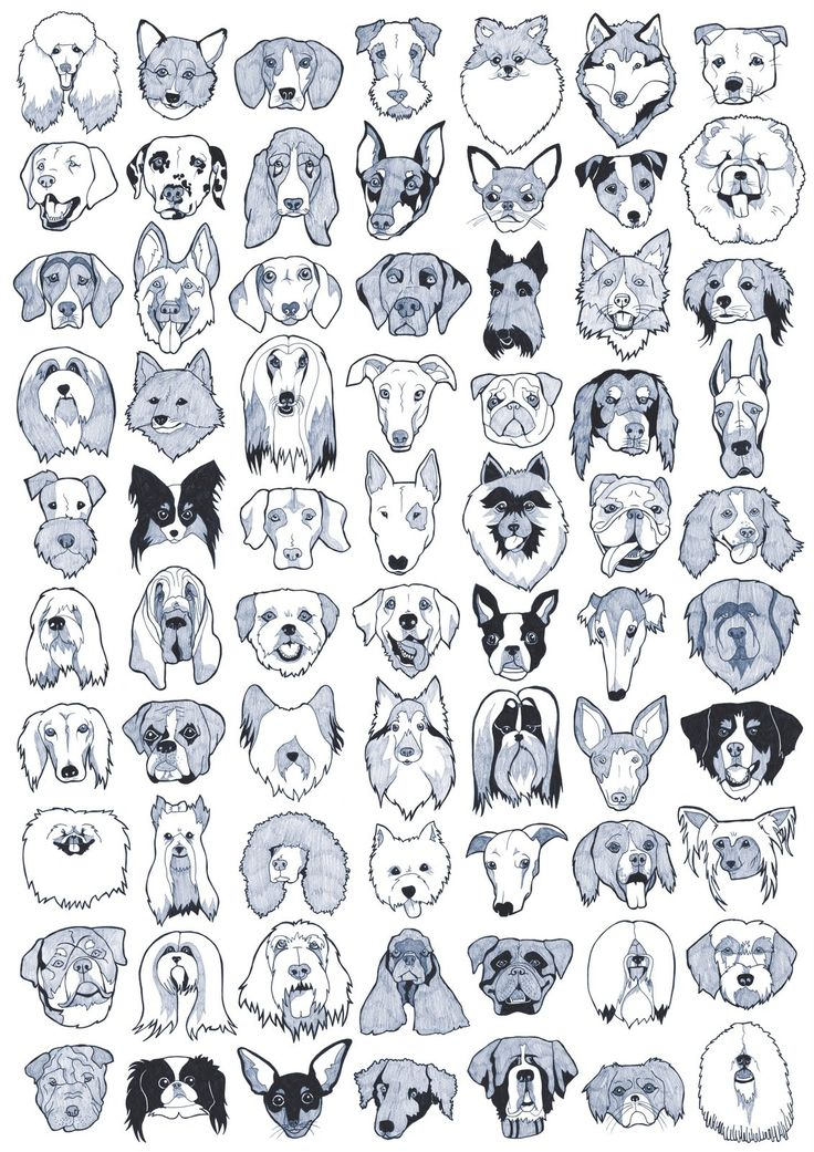 EMILY MAY (not Me!): 70 DOG BREEDS