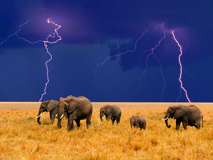Storm over Africa - what a shot! >> indeed! You were clearly meant to be there at that exact moment!