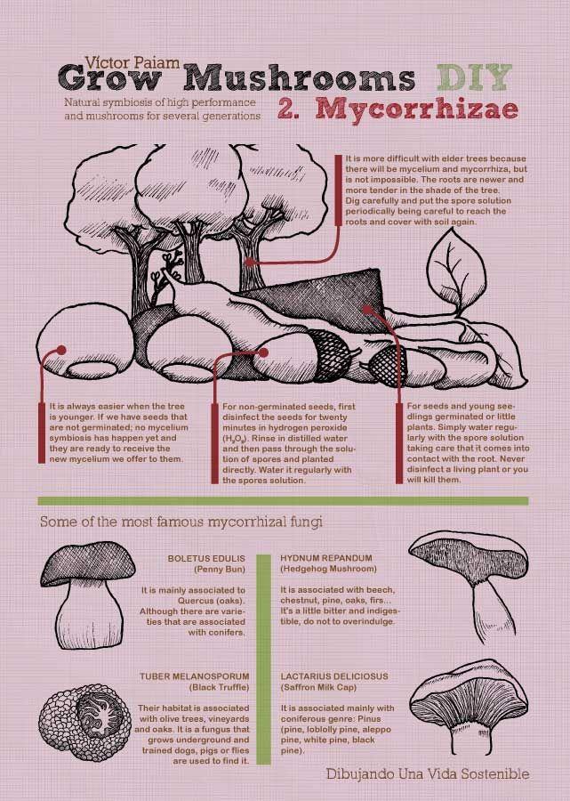 Víctor Paiam - coltivare funghi 2/3