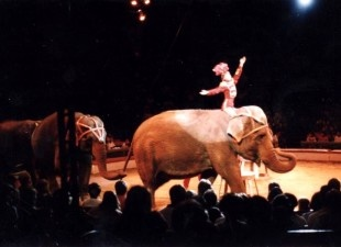 Stop Elephant Cruelty at Ringling Bros. Circus. http://forcechange.com/25621/stop-elephant-cruelty-at-ringling-bros-circus/