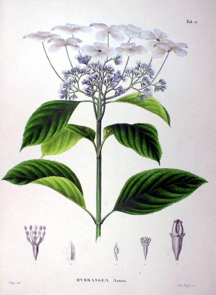 Flora Japonica – 149 photos