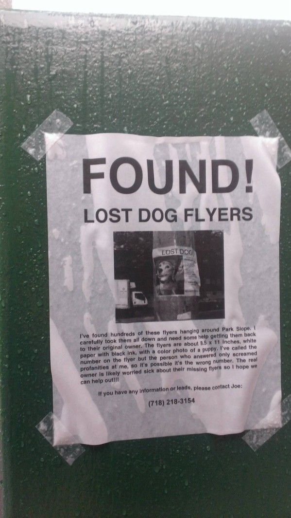 476 best funny images on Pinterest Donald ou0027connor, Donald trump - lost dog flyer examples