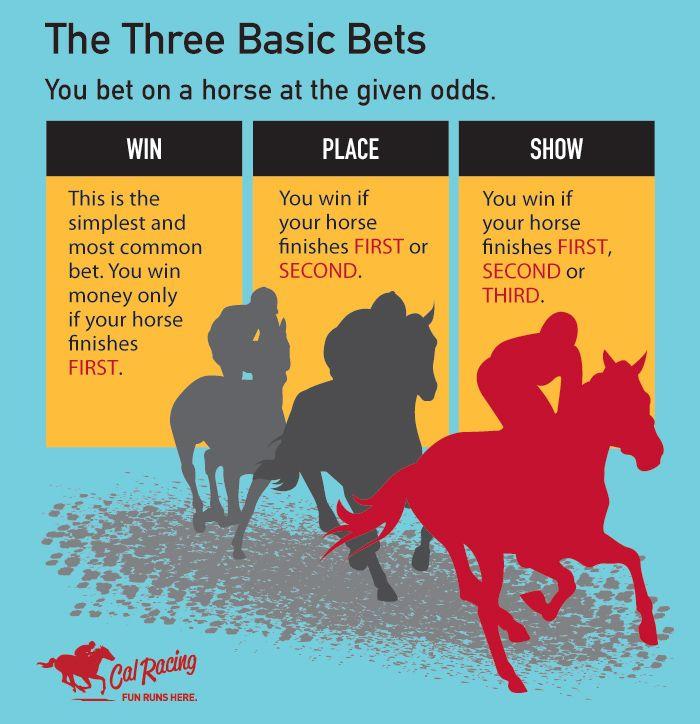 HORSE RACING 101 - The Three Basic Bets #horseracing