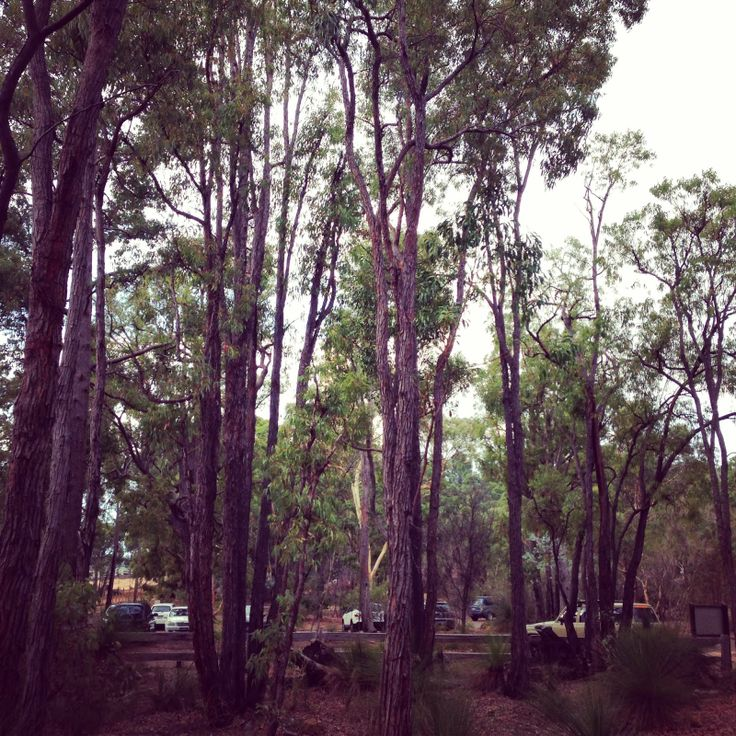 Travelling close to home: Camping in the Perth hills with kids - near Mundaring Weir