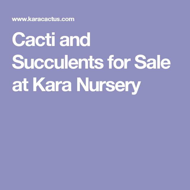 Cacti and Succulents for Sale at Kara Nursery