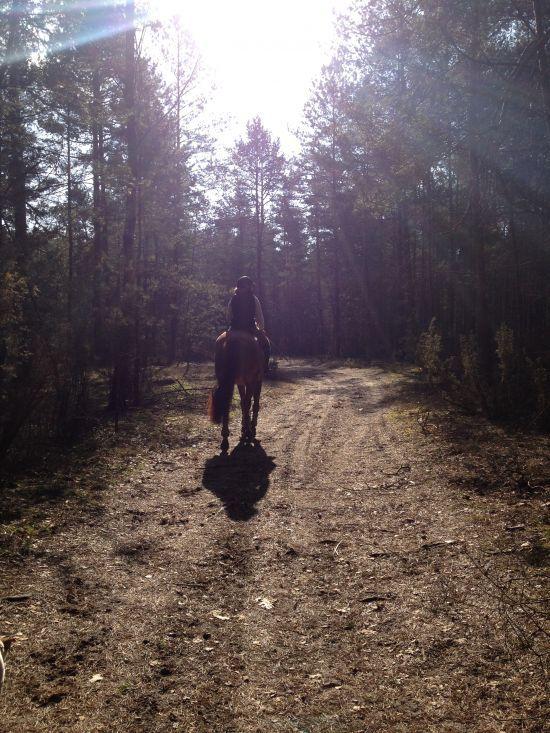 Projekt: Skok po sukces w zawodach! - Wspieram.to #kon #horse #las