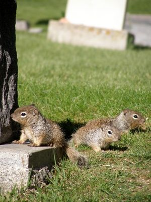 """How to Get Rid of Squirrels with kitchen spices