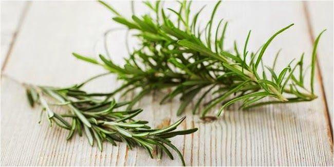 Berikut ini merupakan ramuan herbal atasi penyakit kanker payudara dengan menggunakan Tanaman Obat Untuk Penyakit Kanker Payudara. Mudah- mudahan dapat bermanfaat untuk anda dan keluarga.