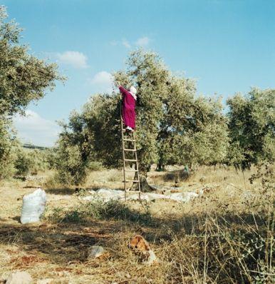 Alessandra Sanguinetti, Palestine