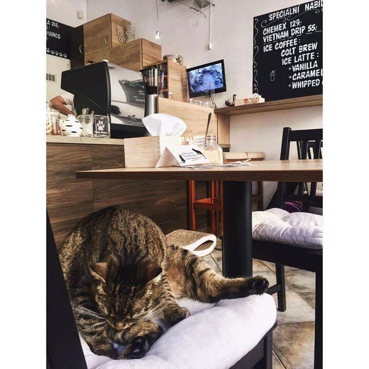 Coffee house full of cats in Prague!  Zobrazit tuto fotku na Instagramu od uživatele @michaelavavrin • To se mi líbí (203)