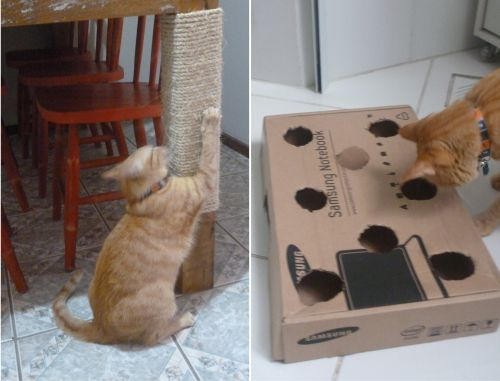 Arranhador e brinquedo para gatos