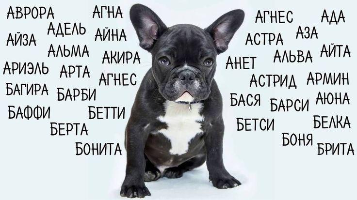 Как выбрать имя собаке? Примеры кличек для «мальчиков» и «девочек»🐾  Выбор имени для своего питомца — дело ответственное, требует серьезного подхода. Советы кинологов и зоологов придут на помощь. Кличка должна соответствовать собаке: особенностям внешности, нраву, породе. Согласитесь, овчарка по имени Тузик подобно таксе по кличке Полкан.😅  Вы можете возразить, что данное сравнение неуместно, никто овчарку Тузиком не назовет. Называют. И Тузиком, и Шариком, и Шалуном.  Не следует называть…