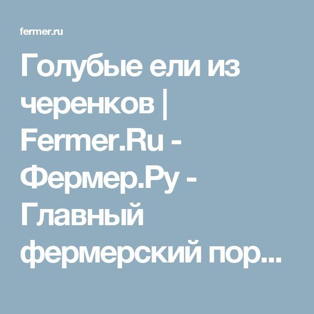 Голубые ели из черенков | Fermer.Ru - Фермер.Ру - Главный фермерский портал - все о бизнесе в сельском хозяйстве. Форум фермеров.