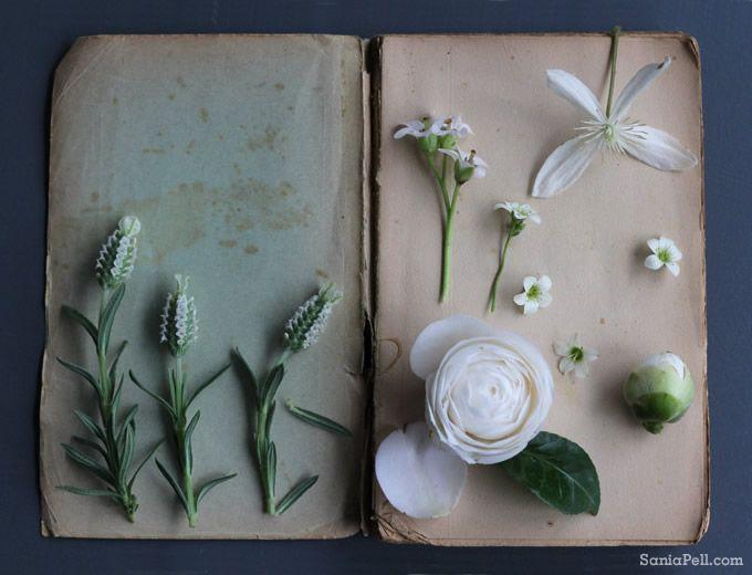 sania-pell-spring-flowers-4