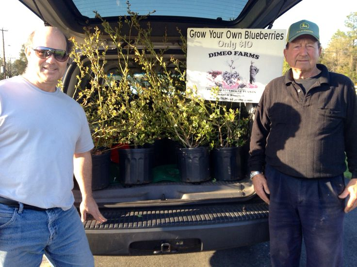 83 Year-Old Farmer DiMeo helps one of our blueberry plant customers who drove out to pick-up some semi-dormant blueberry bushes coming out of dormancy