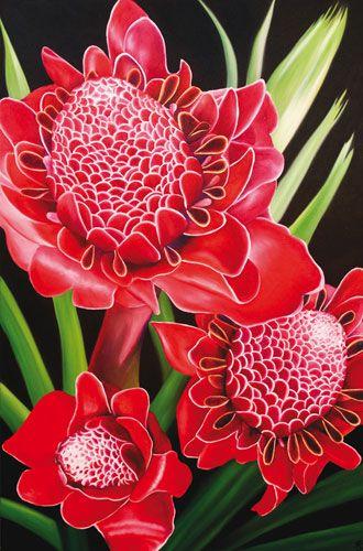 Etlingera elatior(también conocido como jengibre de la antorcha, flor de jengibre, lirio de jengibre rojo, lirio de la antorcha...)