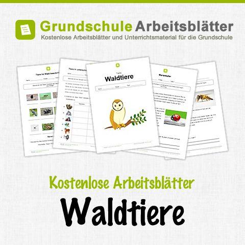 Kostenlose Arbeitsblätter und Unterrichtsmaterial für den Sachunterricht zum Thema Waldtiere in der Grundschule.