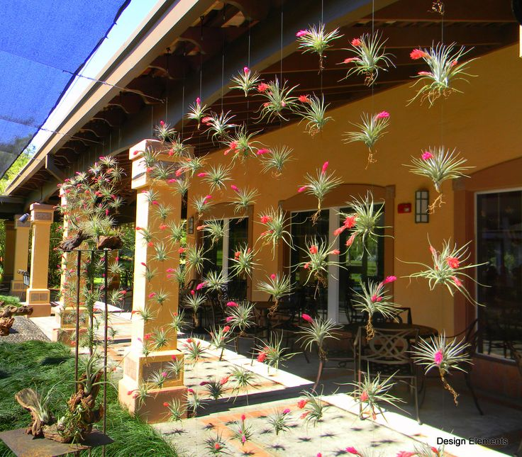 Floating Air Plant Wall