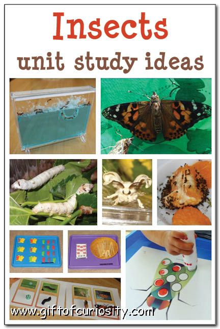 Insect Study - Exploring Spiders, Webs, & So Much More