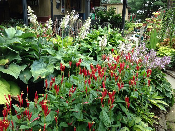 150 best images about native plants for indiana gardens on pinterest