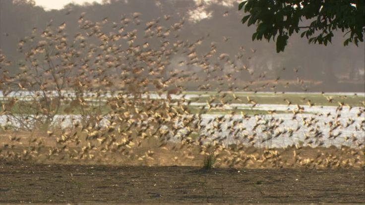 Mana Pools Nationalpark am Sambesi1 auf Simbabwe Reiseführer