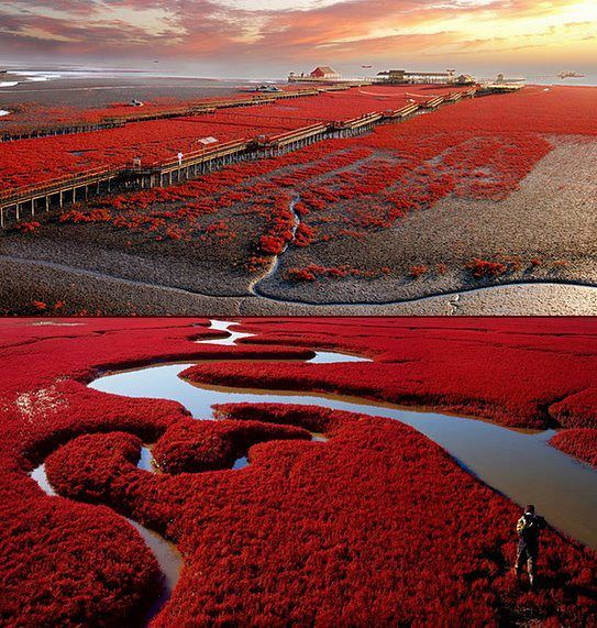 Red Beach in Panjin, China is famous for its red landscape, which is derived from Suede, a unique species of grass.