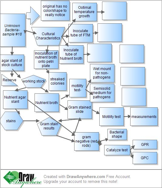 Flow Chart Microbiology Unknown Rebellions