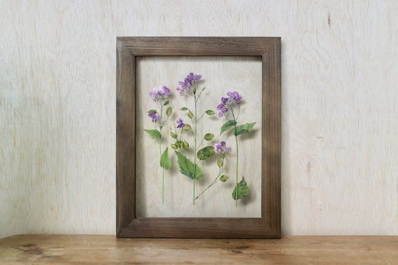 Honesty Flowers, Wildflower Decor, Purple Floral art, Pressed Flower Art, Rustic Wall Decor, Framed – Products