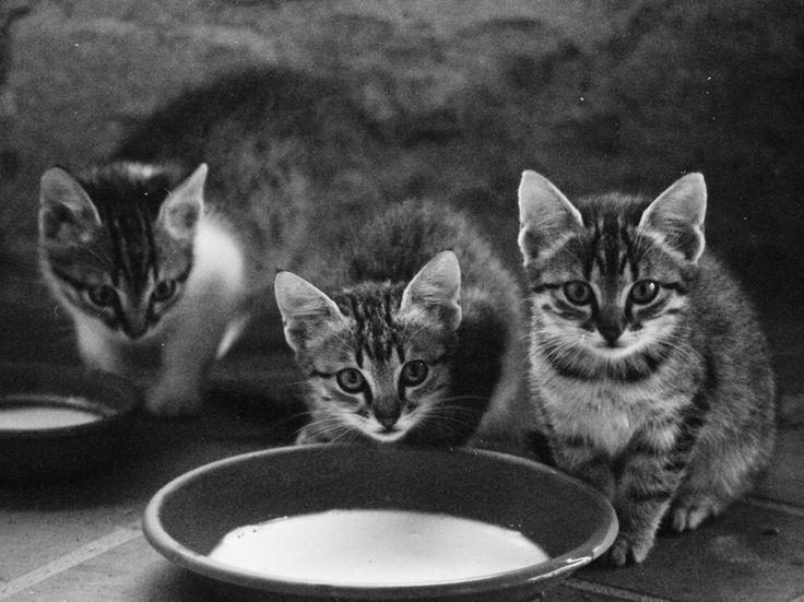Milk Bowl in Tuscany