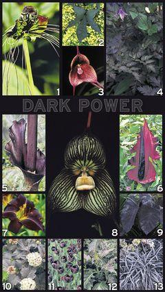 Black plants